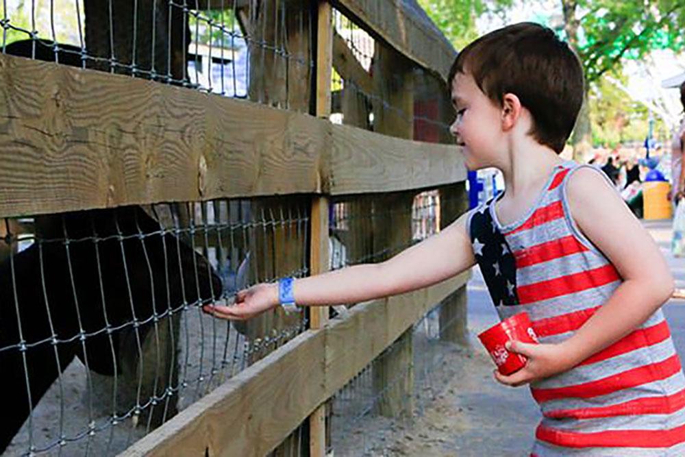 child feeding animals