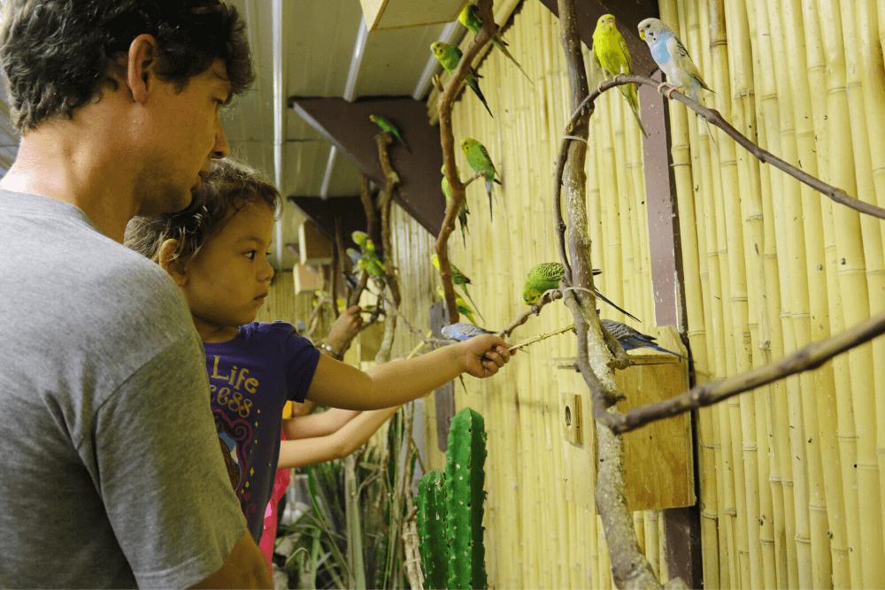 child feeding parakeet
